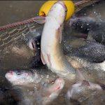 تصفیه آب پرورش ماهی (بخش اول)