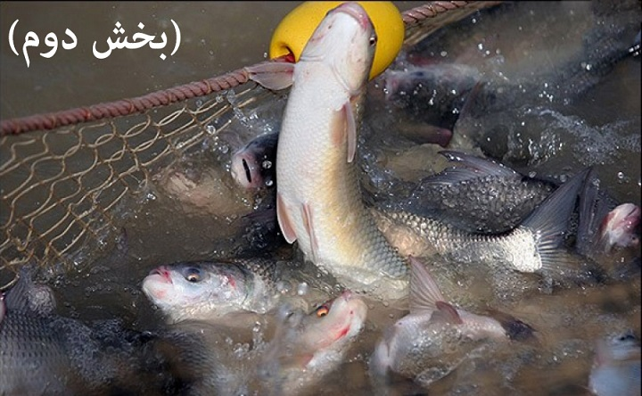 تصفیه آب پرورش ماهی (بخش دوم)