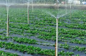 آب مورد نیاز درصنعت کشاورزی باید چه کیفیتی داشته باشد؟